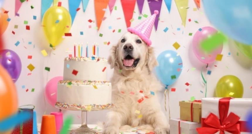 Descubre la manera exacta de calcular la edad de tu perro en años humanos