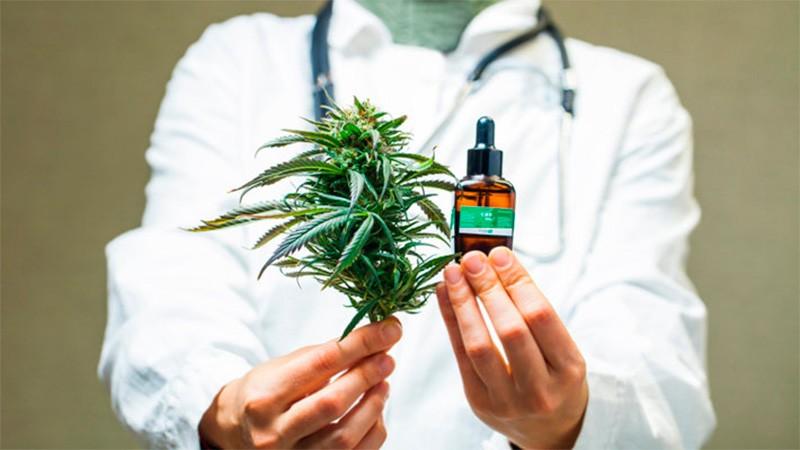 Legalización del cannabis para uso medicinal: Quiénes pueden acceder y qué hay que hacer para autocultivar