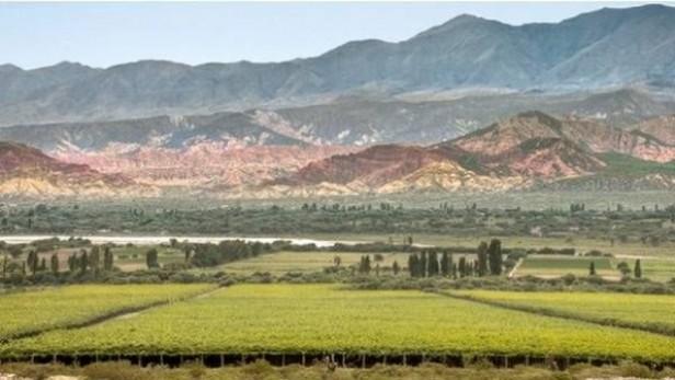 Uno de los mejores vinos del país es catamarqueño