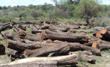Denuncian la tala ilegal de algarrobos en El Impenetrable