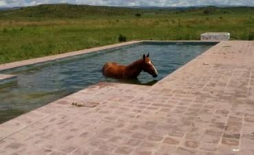 Tequila, el caballo cordobés se dio un chapuzón