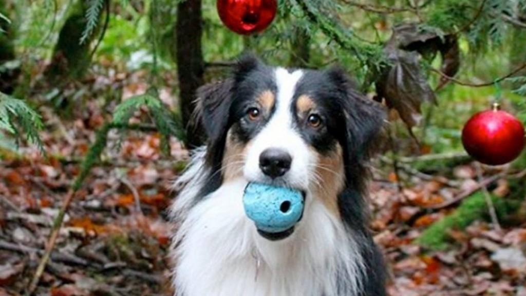 Perra ayuda a su dueña a armar el árbol de navidad y es viral