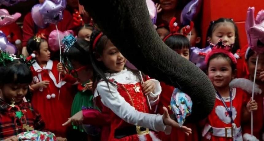 Elefantes disfrazados de Papá Noel repartieron regalos de Navidad en una escuela de Tailandia